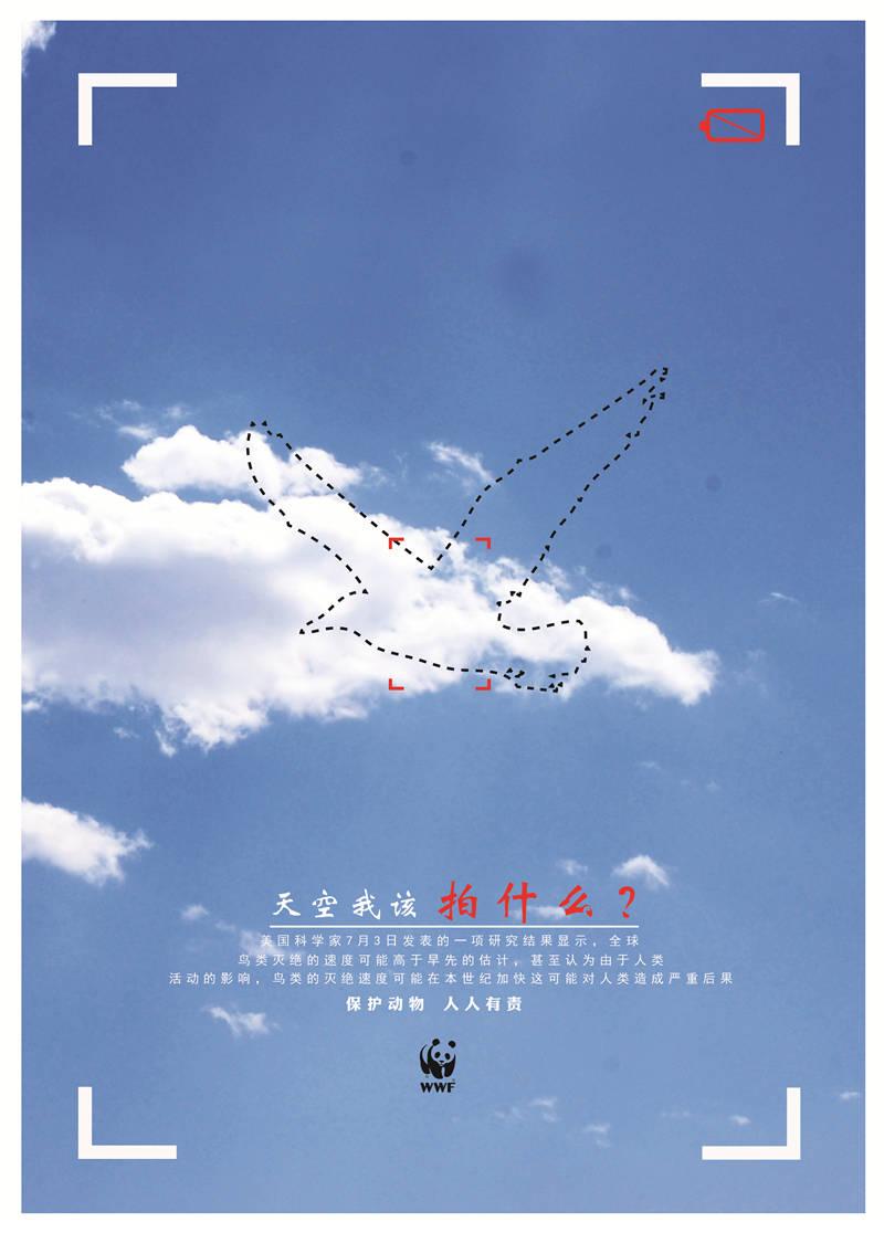 B-拍什么-蒲飞-青岛黄海学院 (1)